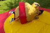 Sumo Suits bouncy castle hire small 2